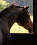 Pferd, das aus Stall heraus schaut Lizenzfreie Stockbilder