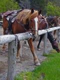 Pferd, das besten Fuß vorbringt Stockbild