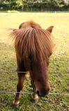 Pferd, das Blätter isst lizenzfreies stockbild