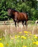 Pferd, das in den Blumen steht Stockfoto