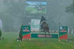 Pferd, das in den Regen einen Wettbewerb von Hindernissen läuft Stockbild