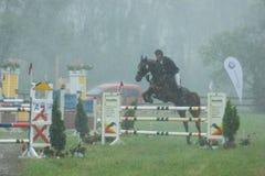 Pferd das in den regen einen wettbewerb von hindernissen läuft