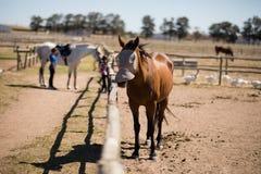 Pferd, das an der Ranch steht lizenzfreie stockfotografie