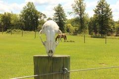 Pferd, das in der Weide weiden lässt Stockbilder
