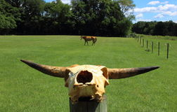Pferd, das in der Weide weiden lässt Lizenzfreie Stockbilder