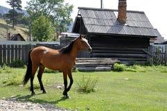 Pferd, das in Dorf geht stockbild