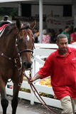 Pferd, das durch die Mengen zu die Anfangszeile, Saratoga-Rennbahn, Saratoga Springs, New York, 2014 geführt wird Lizenzfreies Stockbild