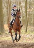 Pferd, das durch Holz läuft Stockfotografie