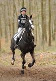 Pferd, das durch Holz läuft Lizenzfreie Stockfotografie