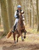 Pferd, das durch Holz läuft Lizenzfreies Stockbild