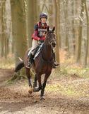 Pferd, das durch Holz läuft Stockfoto