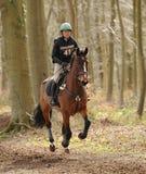 Pferd, das durch Holz läuft Lizenzfreie Stockfotos