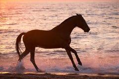 Pferd, das durch Wasser läuft Lizenzfreie Stockbilder