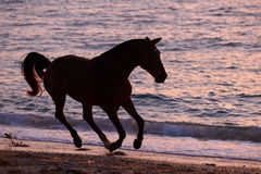 Pferd, das durch Wasser läuft Lizenzfreies Stockfoto