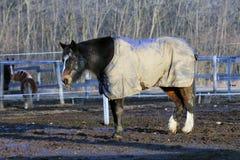 Pferd, das eine Decke trägt Lizenzfreies Stockbild