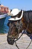 Pferd, das eine Hut-Kopf-Nahaufnahme trägt Lizenzfreie Stockfotografie