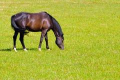 Pferd, das in einem Grasland weiden lässt Lizenzfreie Stockfotografie