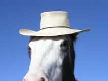 Pferd, das einen Hut trägt Lizenzfreie Stockfotos