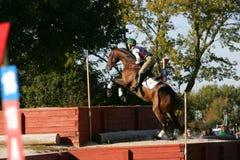Pferd, das in einen Wettbewerb läuft Stockfoto