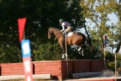 Pferd, das in einen Wettbewerb läuft Stockbilder