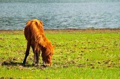 Pferd, das frei in Shudu See am Shangri-La durchstreift Lizenzfreies Stockbild
