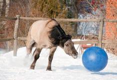 Pferd, das Fußball spielt Lizenzfreie Stockfotografie