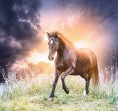 Pferd, das grünes Feld über drastischem Himmel laufen lässt Stockfotos