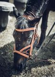 Pferd, das Gras für das Mittagessen isst lizenzfreie stockfotografie