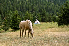 Pferd, das Gras isst Stockbilder