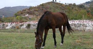 Pferd, das Gras isst stock video