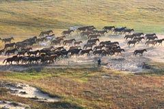 Pferd, das in Grasland läuft Lizenzfreies Stockbild