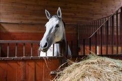 Pferd, das Heu isst Stockfoto