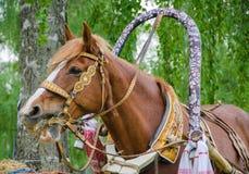 Pferd, das Heu kaut lizenzfreie stockfotos