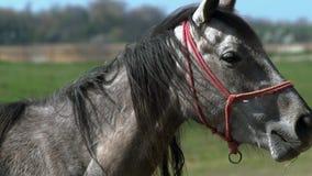 Pferd, das im Holz schaut stock video footage