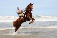 Pferd, das im Meer aufzieht Lizenzfreie Stockfotos