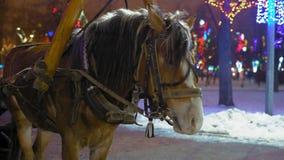 Pferd, das im Park auf Heiliger Nacht rodelt stock footage