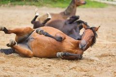 Pferd, das im Sand liegt Stockfotos