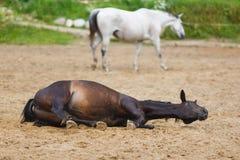 Pferd, das im Sand liegt Lizenzfreies Stockfoto