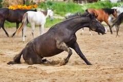 Pferd, das im Sand liegt Stockfotografie