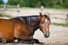 Pferd, das im Stall im Freien liegt Lizenzfreies Stockbild