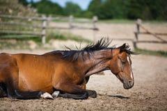 Pferd, das im Stall im Freien liegt Lizenzfreies Stockfoto