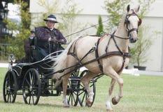 Pferd, das Konkurrenz Dressage antreibt Lizenzfreies Stockfoto