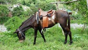 Pferd, das mit Sattel auf einer Wiese weiden lässt lizenzfreies stockfoto