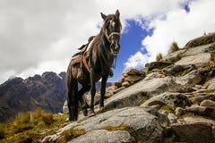 Pferd, das mit schwierigem Gelände in Santa Cruz Trek, Peru struggeling ist lizenzfreie stockfotografie