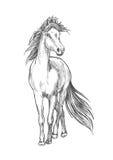 Pferd, das mit wellenartig bewegender Mähnenbleistiftskizze steht Stockbilder
