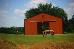 Pferd, das nahe Stall weiden lässt Stockfotografie
