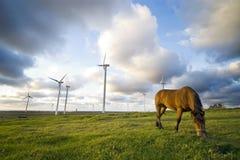 Pferd, das nahe Windmühlen weiden lässt Lizenzfreies Stockfoto
