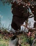 Pferd, das Reflexion betrachtet lizenzfreie stockfotografie