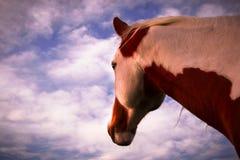 Pferd, das in Richtung des Sun blickt Stockfotos