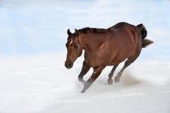 Pferd, das in Schnee läuft Lizenzfreies Stockfoto